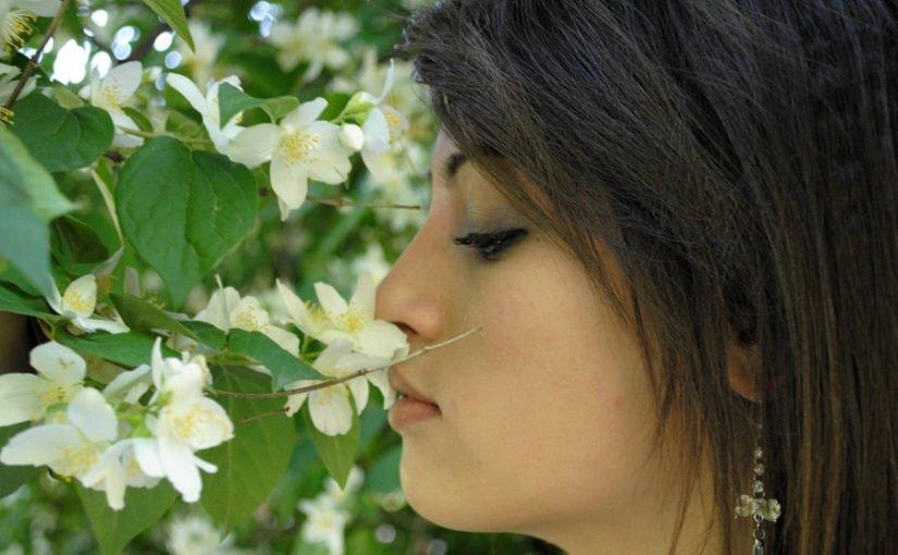 Refreshingly Fragrant Champa Attar supplying by Kazima